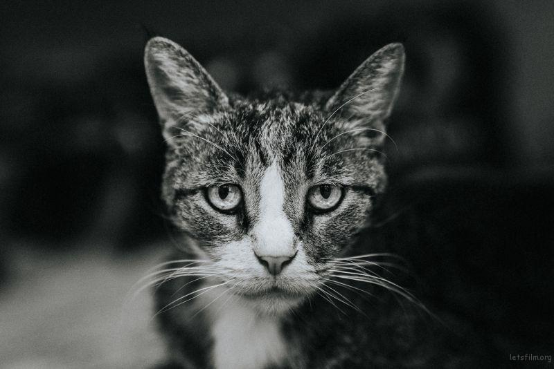 Photo by Daniel Chekalov on Unsplash