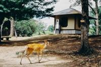 [19069] 奈良的风与鹿