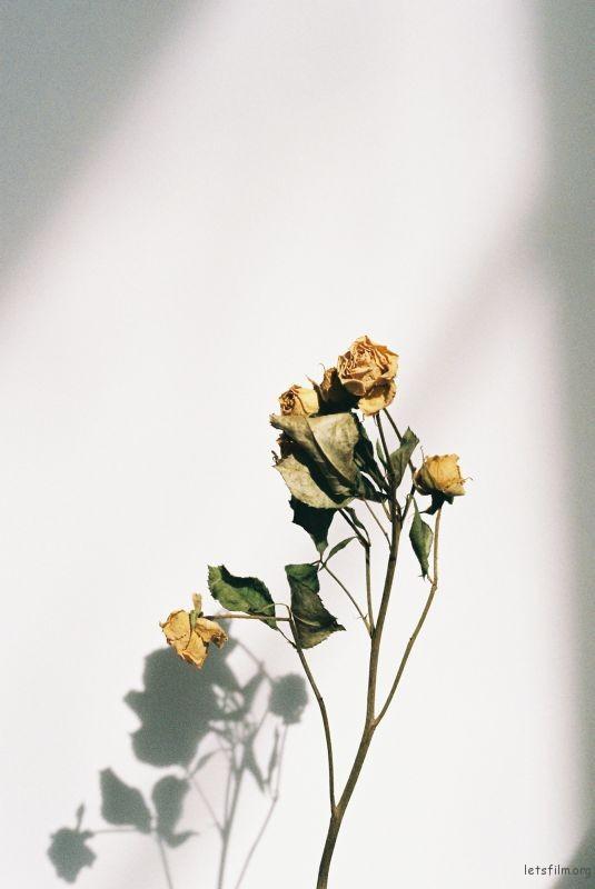 花的姿態(3)