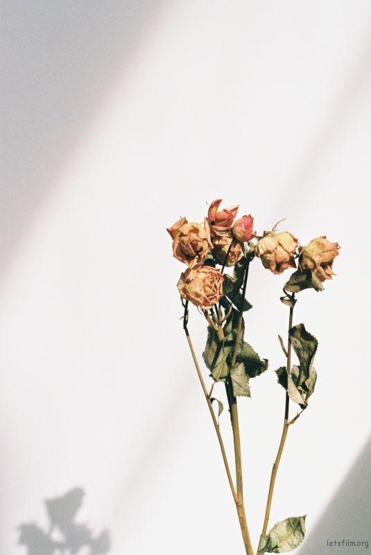 花的姿態(2)