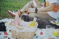 [19534] 路边野餐