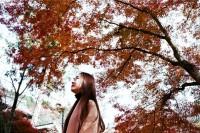 [19798] 京都赏枫