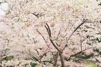 [20245] 春有春味