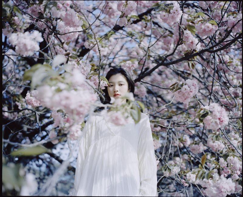 桜が咲くいた (7)