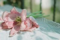 [20496] 春花