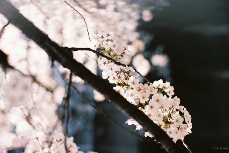 平成时代 最后的樱花 (3)