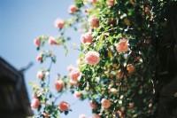[20684] 从春天出发,就像语言从表达出发,歌从欢乐出发。