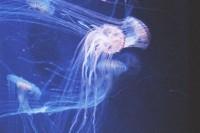 [20936] Underwater