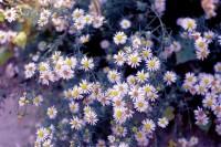 [20894] 花开
