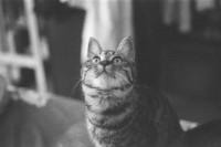 [21577] 流浪猫咪与爱