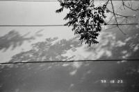 [21765] 黑白秋日