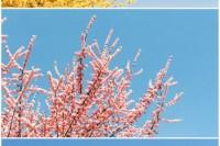[22278] 春光灿烂的日子❤️