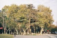 [22277] 「树太高,看惯秋色变夏花」