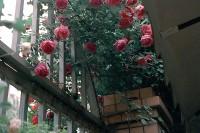 [22357] 阴天和花