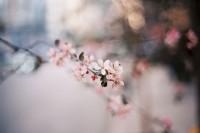 [22447] 花开花谢花语