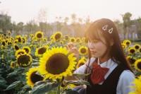 [22488] 向阳花开