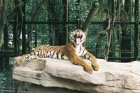[22699] 七月的动物园