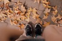 [22744] 一些片段,关于秋