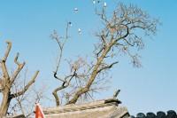 [22793] 新春的一卷彩色