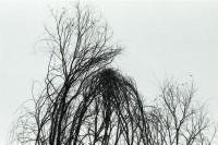[22861] 树