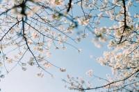 [22898] 请用力感受春天